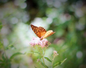 Schmetterling ©Helen Mary McIntyre